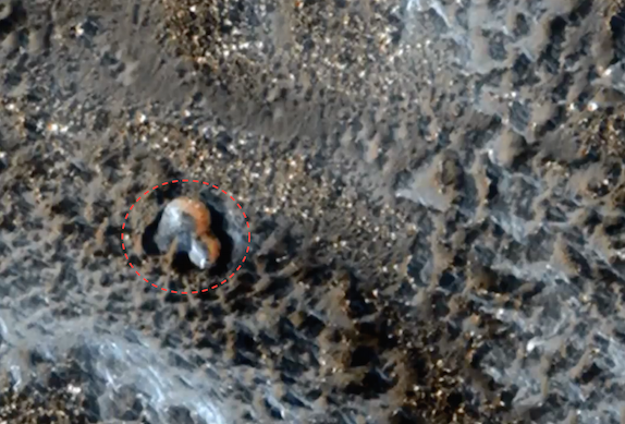 UFO SIGHTINGS DAILY: Ancient Dome Found In Mars Photo, Jan ...