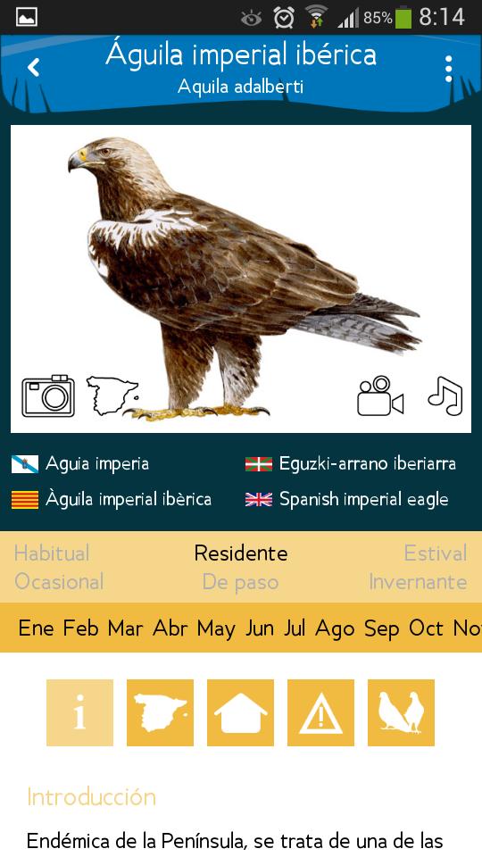 Ficha de Ave Parque Nacional Cabañeros Aplicación Movil