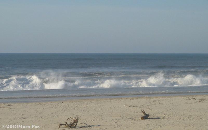 A winter sea view - Torreira beach