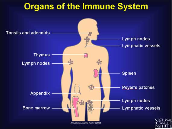 Lymph Massage Salt Lake City The Lymph System And Autoimmune Disease