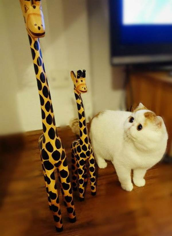 funny cat pictures, cat photos, funny cats, cats
