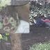 5 Foto: Padah Pasangan Ditemui Buat Maksiat Dalam Belukar, Lihat apa yang terjadi amat mengerikan !!!