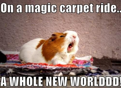 Funny Guinea Pig - On A Magic Carpet Ride - A Whole New Worlddd!