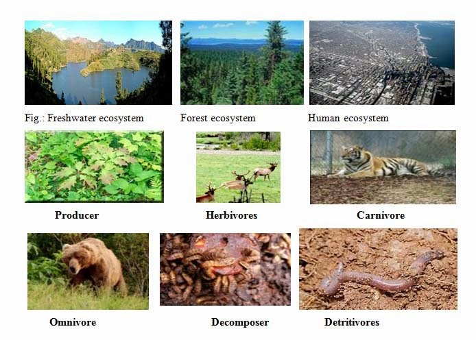 living and nonliving components