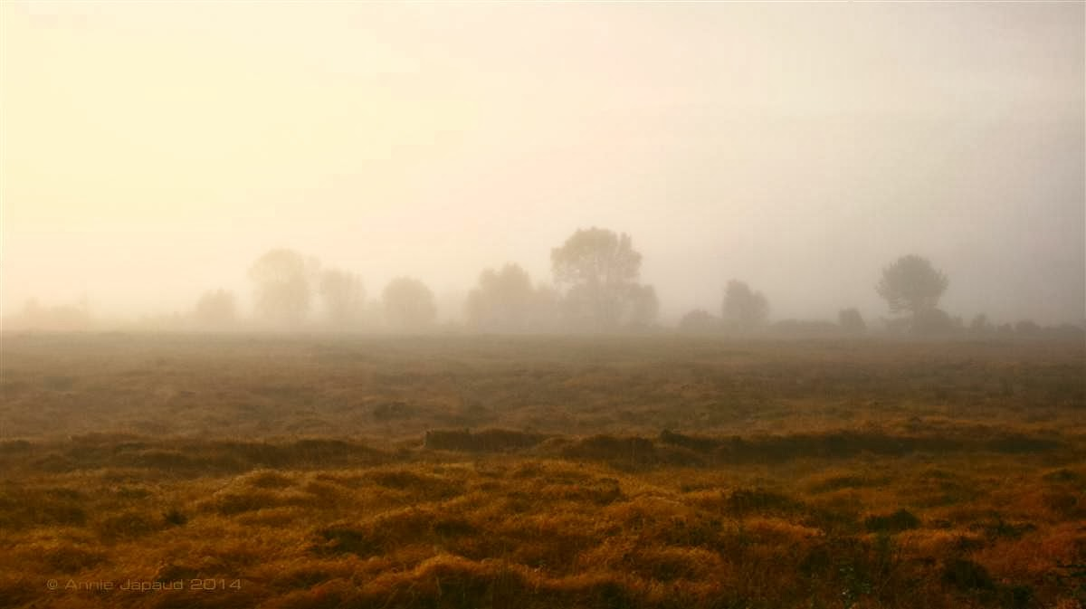 an image of a foggy filed with trees in the distance melting in the fog