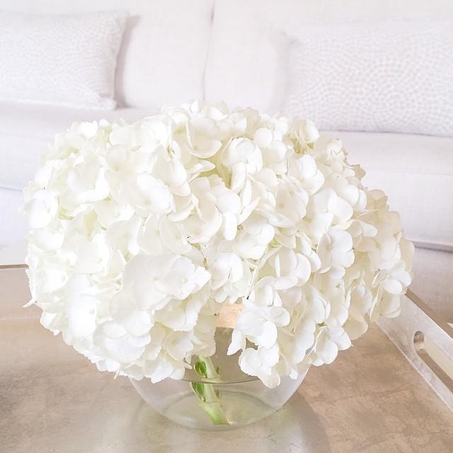 white hydrangea in vase