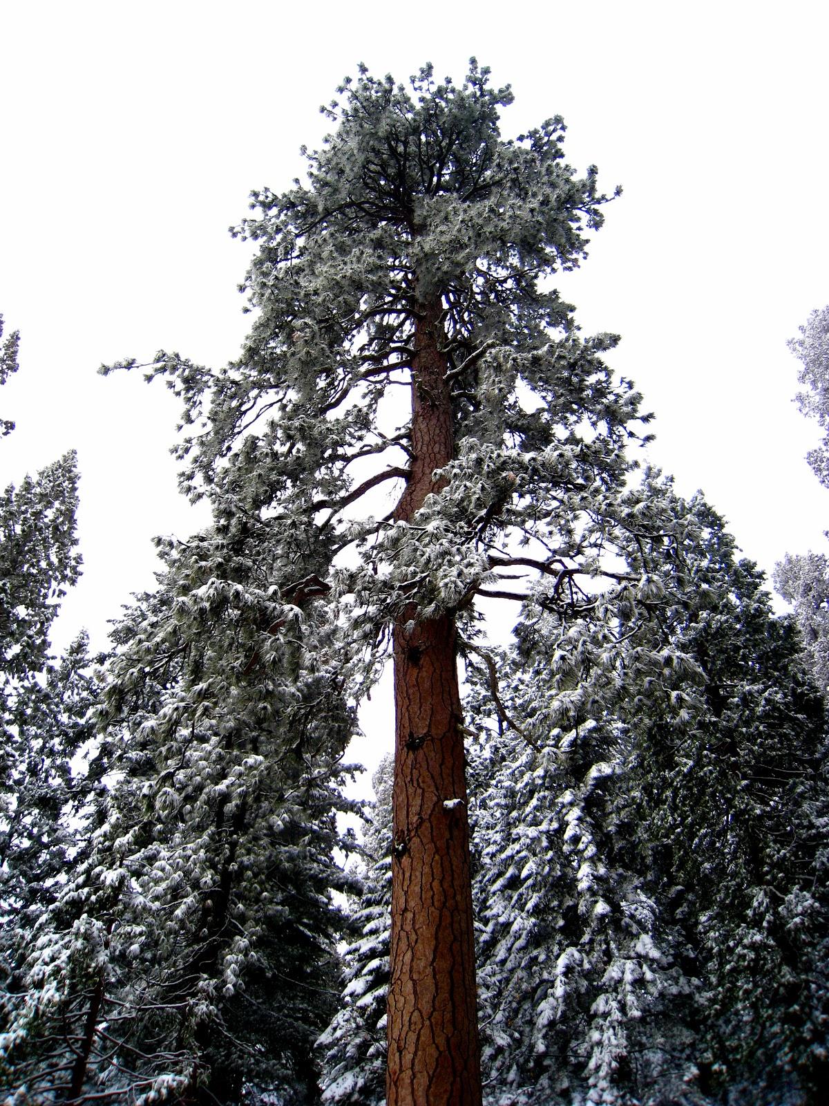 Alex's Weblog: Sequoia National Park