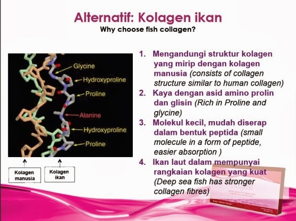 BB Plus Collagen berasal dari Collagen ikan