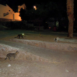 cats in eilat