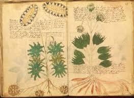 Il misterioso manoscritto di Voynich
