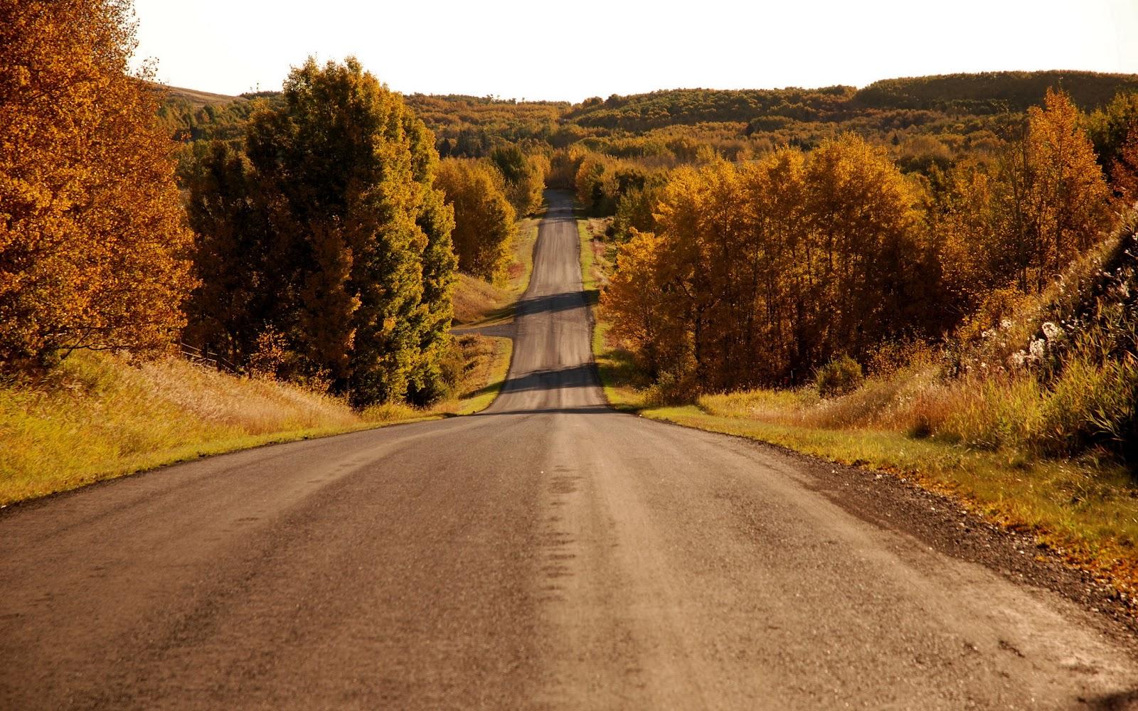 Endless Autumn Road HD Wallpaper