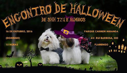 Halloween dos shih tzus e amigos