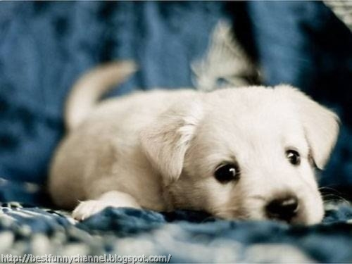 Cute white puppy.