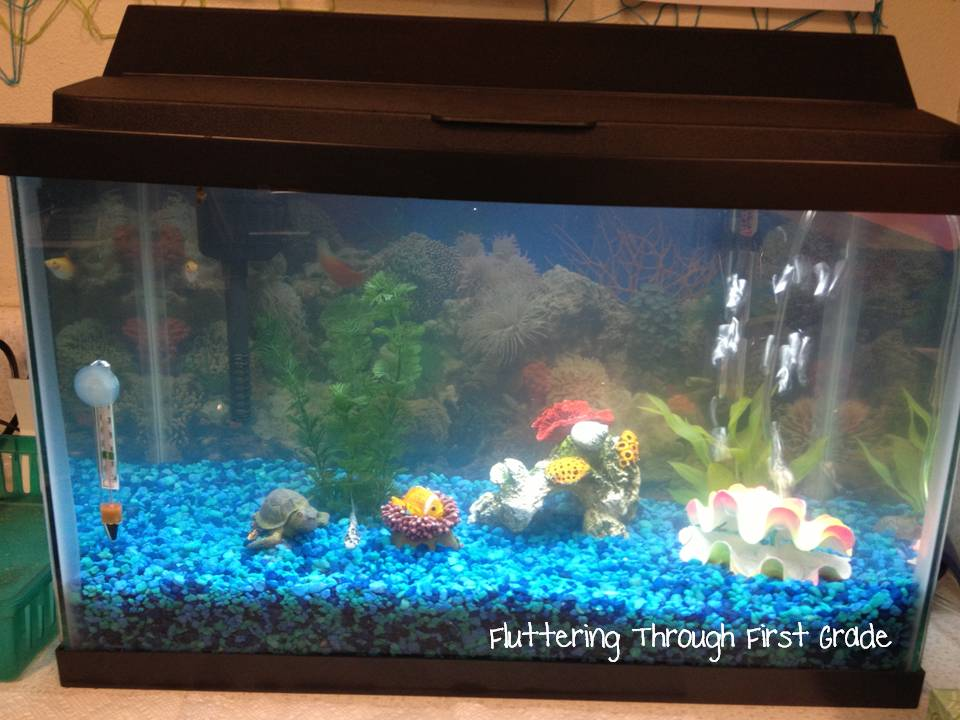 Fluttering through first grade 5 for friday for First fish tank