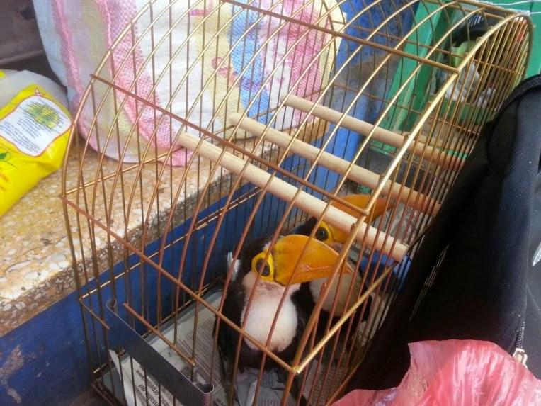 venta clandestina animal silvestre: