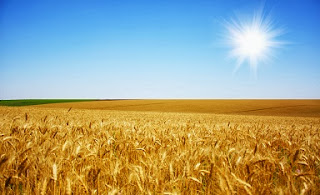 The Synagogue of Satan: Those Who Claim To Be Judah But Do Lie - Sun Over Wheat Field