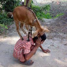 animal Naughty Photo