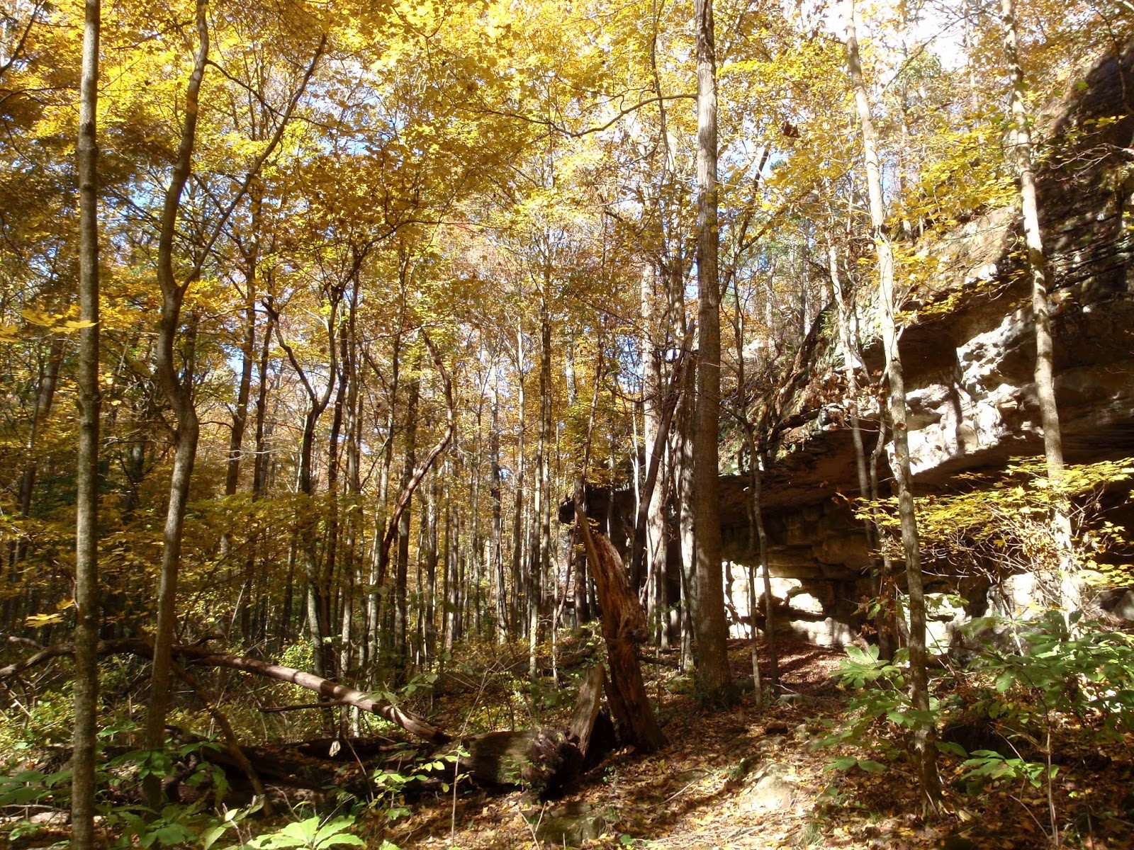 Great Outdoors Searching For Fall Colors Shawnee National Forest