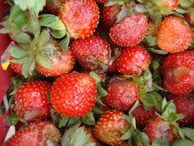 Baguio strawberry farm_05