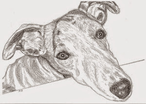 Greyhound Whippet pic