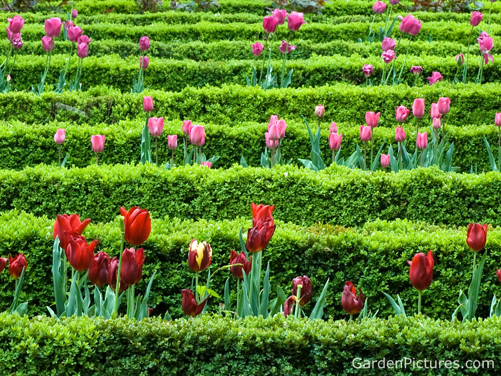 Funny wallpapers flower garden flower gardens flower for Flower garden design ideas