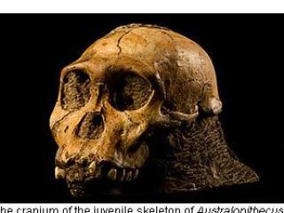 非洲 南方古猿 遺骸出土 人 猿轉折演化最新證據