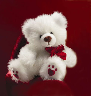 Beautiful White Teddy Bear Picture free download