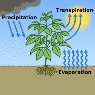Fitodepurazione water management and sustainable for Vassoi assorbenti