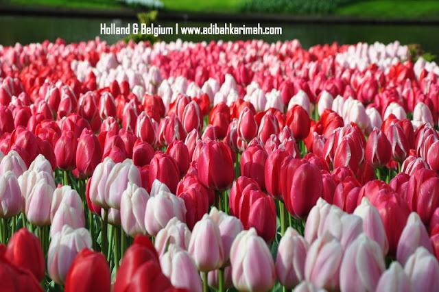 Free holiday trip to Holland and Belgium for premium beautiful bisnes di taman tulips keukenhof holland
