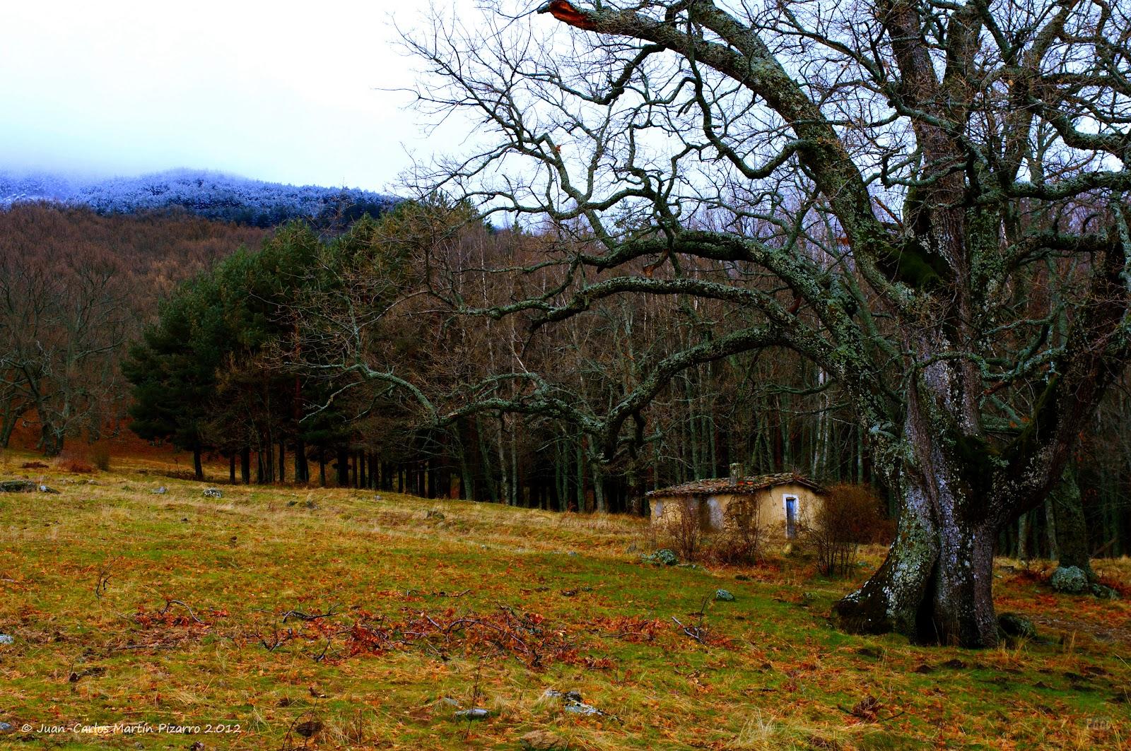 Fotos de cualquier parte la casita en el bosque - Casitas en el bosque ...