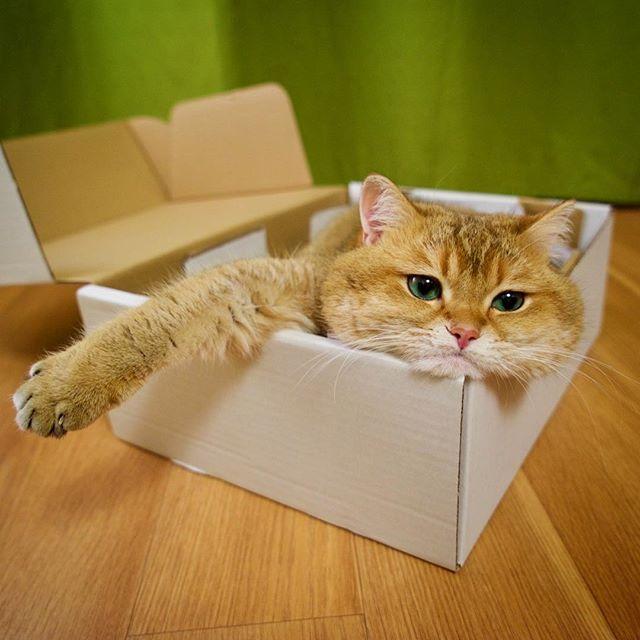 HOSICO si kucing photogenic