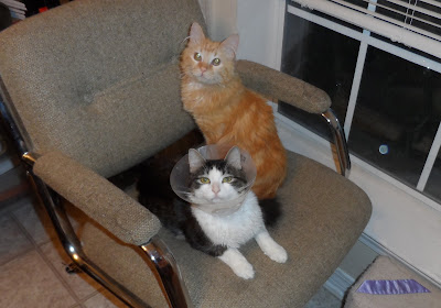 Anakin & Mika share The Favorite Chair
