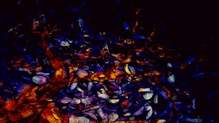 4 Arvore_despida_ sobre texturas de folhas_Superexposição de cor_255