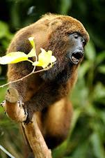 Fauna Bacia Taquari-Antas- Fonte: Aepan-ONG - Série: Mamiferos