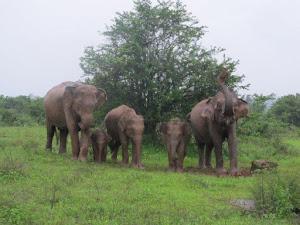 Sri Lanka, November 2012