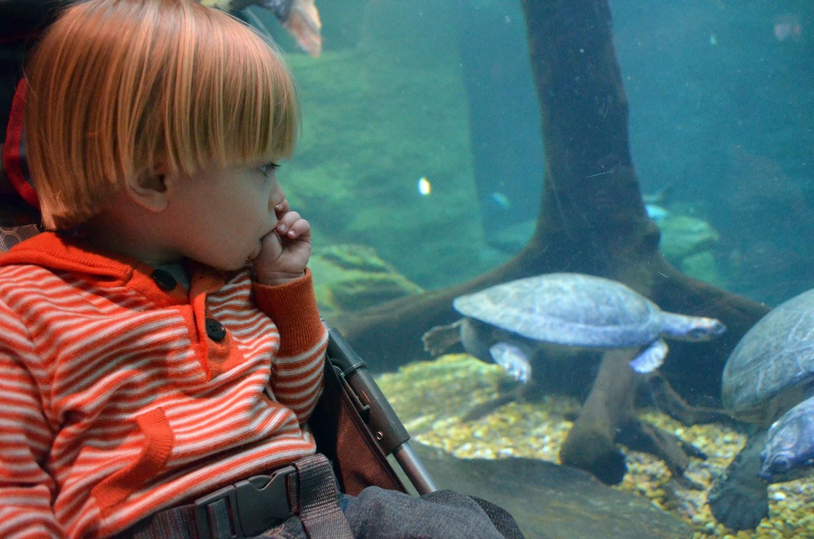 Dallas Aquarium Micah And