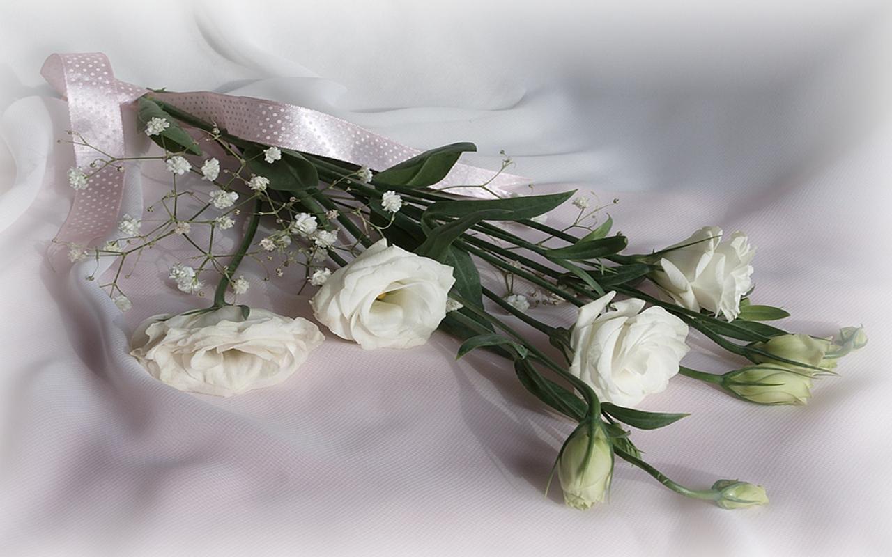 http://1.bp.blogspot.com/-yQ0MpGP85xc/Tj7olr32gLI/AAAAAAAAD5o/DgGbzFniZJo/s1600/buchet_trandafiri_albi.jpg
