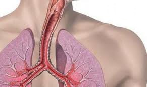 Ghimbirul si inul pot ameliora astmul bronsic