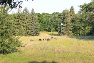 photo of a flock of turkeys in a meadow