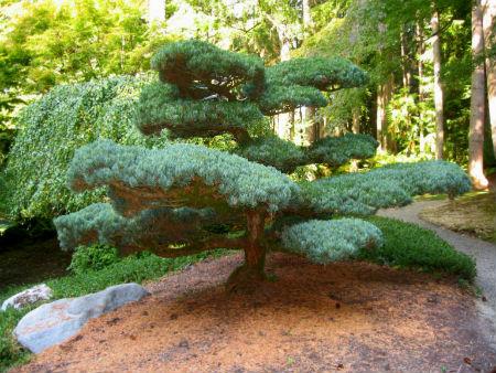 Что такое декоративные деревья своими руками