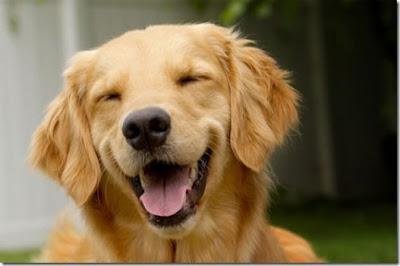 cachorro rindo