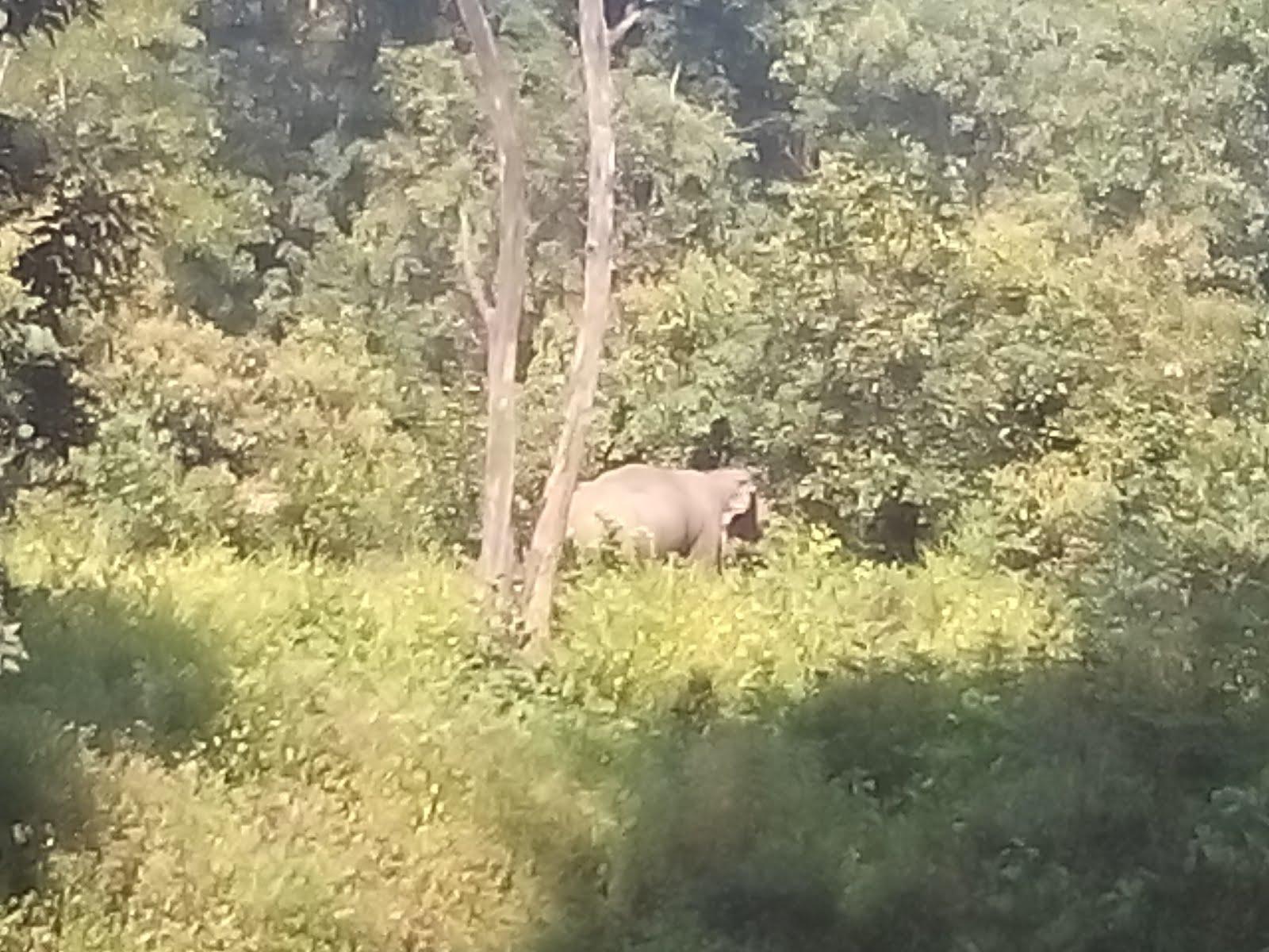 Elephant in front of Corbett Jungle Inn