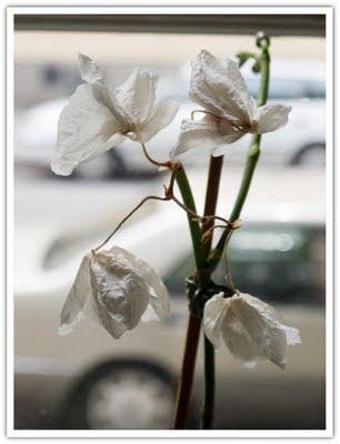 Vissen orkidé