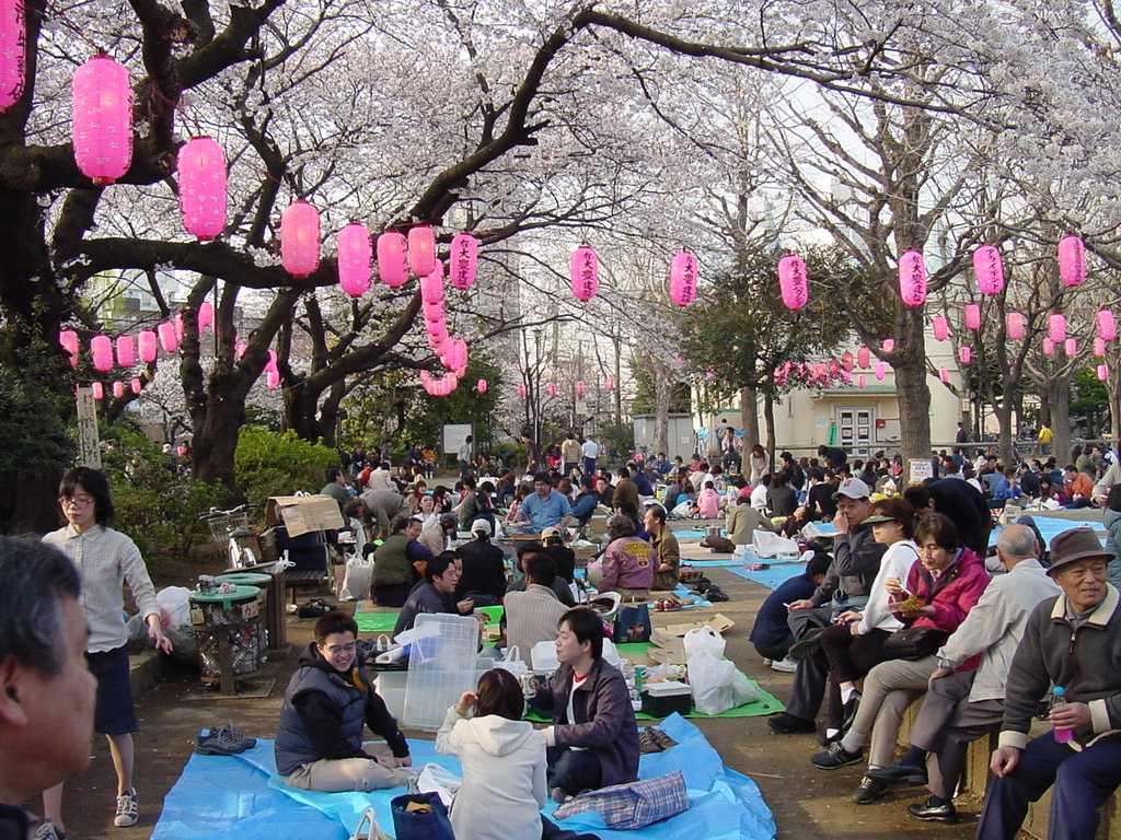 Piknik pod sakurami