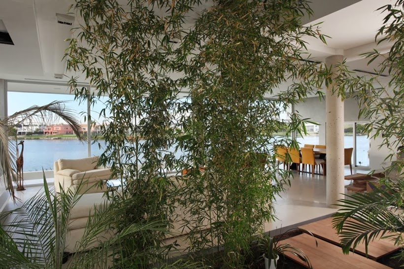 Plants inside of Casa del Cabo by Andres Remy Arquitectos