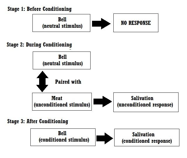 ivan pavlov theory of behaviorism pdf