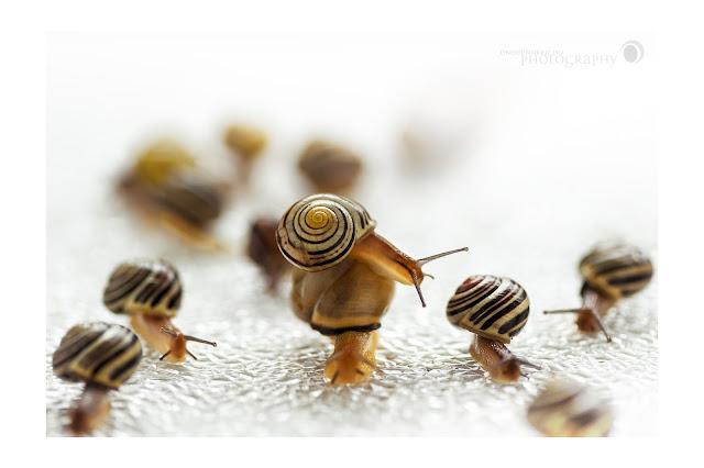 Snails, Schnecken