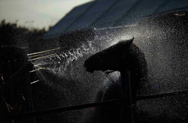 красивое фото лошади и воды