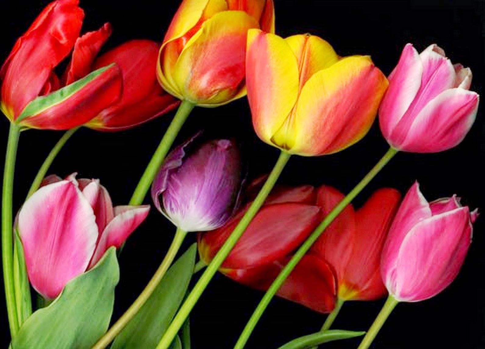 flores-fotos-imagenes