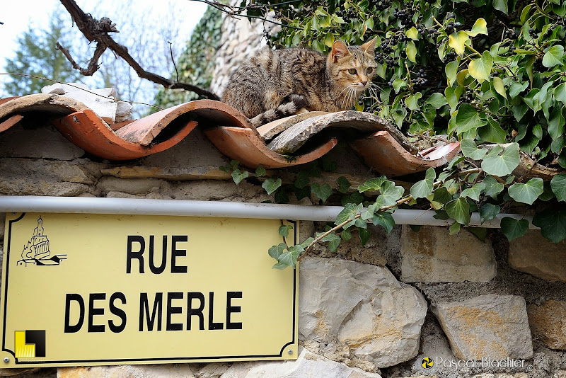le chat de la rue des merle photo pascal blachier